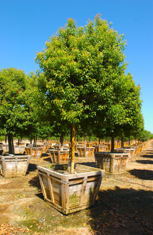 Pardee Tree Nursery - Product Photos